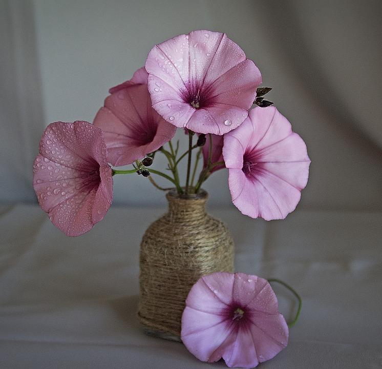 wild-flowers-2225499_960_720